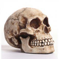 Historical skull